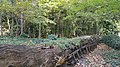 Autumn season in Butanic Garden فصل پاییز در باغ بوتانیکال تفلیس 15.jpg