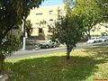 Av Marechal Carmona - panoramio - Paulo Humberto (2).jpg
