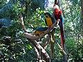 Aves coloridas.jpg