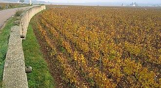 Bâtard-Montrachet - Bâtard-Montrachet in autumn.