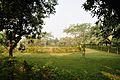 Back Gargen - Prayas Green World Resort - Sargachi - Murshidabad 2014-11-29 0187.JPG
