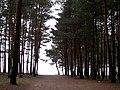 Baltiyskiy rayon, Konigsberg, Kaliningradskaya oblast', Russia - panoramio (36).jpg