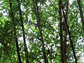 Bamboo Thicket - Flickr - treegrow.jpg