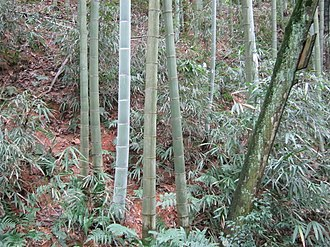 Jianyang District - Image: Bamboo in Tan Mountain Park