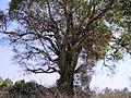 Bandipur Tiger Reserve - panoramio (29).jpg