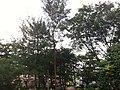 Batam - panoramio (1).jpg