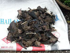 Bats for eating in Laos.jpg