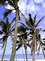 Beach Trees.jpg
