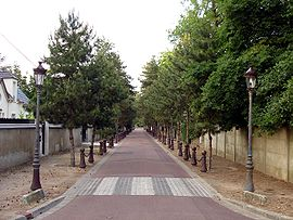 The Avenue des Sapins, in Beauchamp