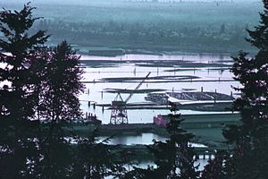 Bellingham waterfront - The harbor of Bellingham, Washington, filled with logs, 1972