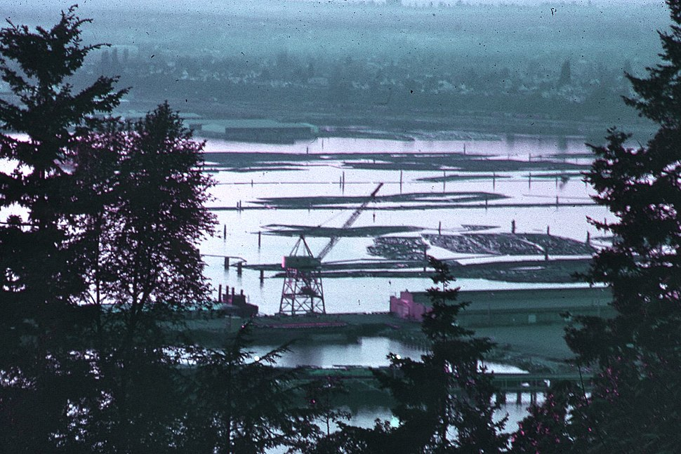 Bellingham, Washington, harbor, filled with logs, 1972