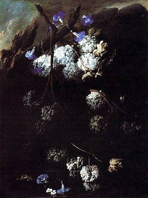 Andrea Belvedere - Morning glories and snowballs at water, 1680.