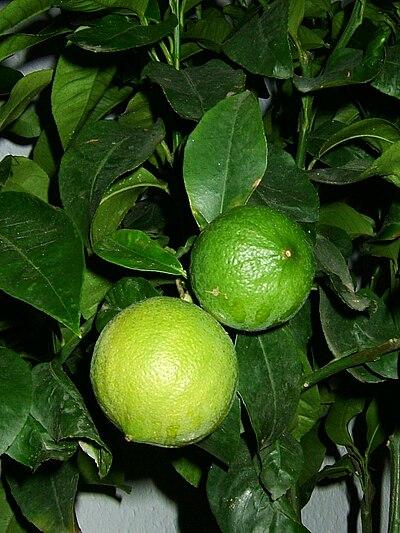 Bergamotte-Frucht