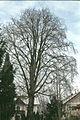 Bergulme Mettmach 1992-02-22.jpg