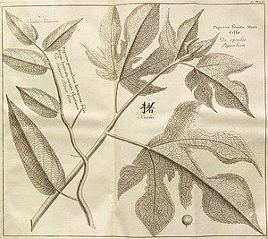 Beschrijving van Japan - Papierboom.jpg