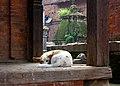 Bhaktapur Nepal (3992037311).jpg