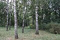 Bila Tserkva, Kyivs'ka oblast, Ukraine - panoramio (11).jpg