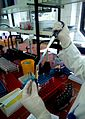 Biochemist working in biochemical laboratory, Биохемичар 4.jpg
