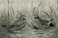 Bird notes (1922) (14568942860).jpg