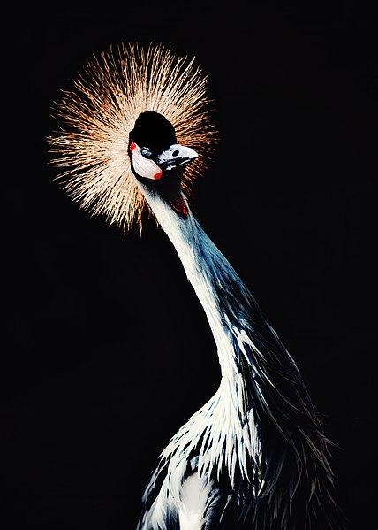 File:Birdpark performer.jpg