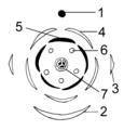 Blütendiagramm Beispiel.png