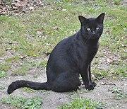 Blackie looking on. (25324928953).jpg