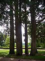 Blois - jardins de l'Évêché (02).jpg