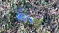 Blue stone in the garden of Eben-Ezer.jpg