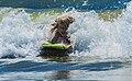 Bodyboarding SantaMonica.jpg