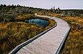Bog Boardwalk (21576051319).jpg