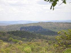 Vegetação característica na região noroeste de Minas Gerais, Brasil.
