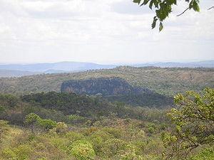 Vegeta��o caracter�stica na regi�o noroeste de Minas Gerais