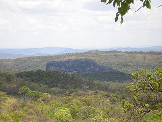 Cerrado - Vegetation in northwest Minas Gerais, Brazil.
