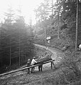Bosbewerking, arbeiders, boswegen, boomstammen, kabels, takelwerkzaamheden, Bestanddeelnr 253-4068.jpg