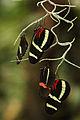 Bosje vlinders (4027747736).jpg