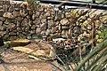 Botanischer Garten der Universität Zürich - Kuppel - Innenansicht 2011-08-21 14-03-36.jpg