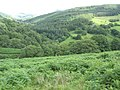 Bracken infested land above the Mawddach Valley - geograph.org.uk - 492705.jpg