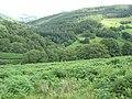 Bracken infested land above the Mawddach Valley - geograph.org.uk - 492705.jpg