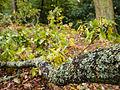 Branch with lichen (10493347685).jpg