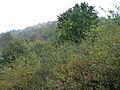 Bresnička reka 8.JPG