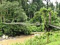 Bridge to the rainforest.jpg
