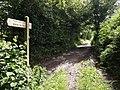 Bridleway meets lane at Combe St Nicholas, Somerset.jpg