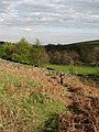 Bridleway past Body Close Farm - geograph.org.uk - 1276267.jpg