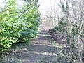 Bridleway through winter woods. - geograph.org.uk - 309774.jpg