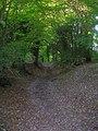 Bridleway up Chantry Hill - geograph.org.uk - 1003052.jpg