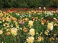 Britzer Garten Rundgang 14.jpg