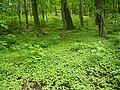 Brno, Wilsonův les (8).JPG