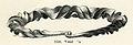 Bronshalsring fr Badelundaåsen Västmanland (Montelius 1917 fig1458).jpg