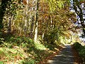 Bryngwyn Wood - geograph.org.uk - 601507.jpg
