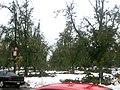 Buffalo snow storm16.jpg